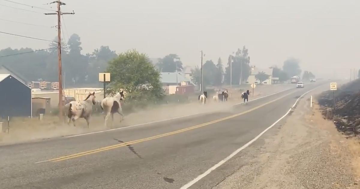 他の人が致命的な火傷の後に下ろしたので、馬は山火事から逃げるのを見ました
