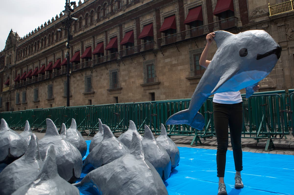 Mexico abandons fishing-free zone for endangered porpoise