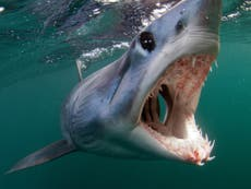 Shark week: Map shows where biggest species are found in UK waters