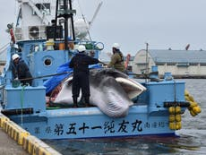 Tokyo Olympics 'green' efforts undermined by Japanese whaling, protesters warn