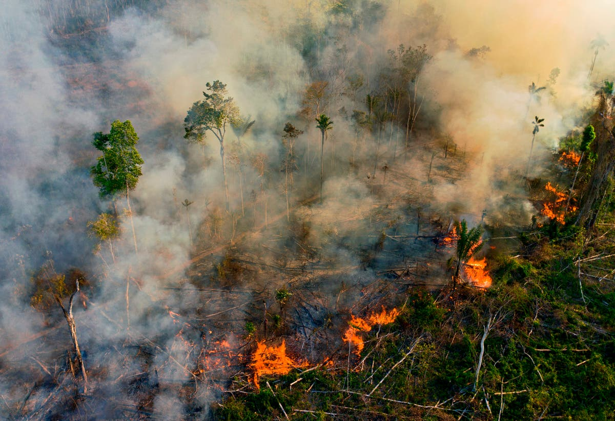 Droughts and fires in the Amazon continue to cause CO2 emissions for years, étude dit