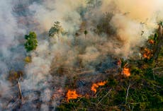 Até 85% of Amazon's threatened species affected by fires in past two decades