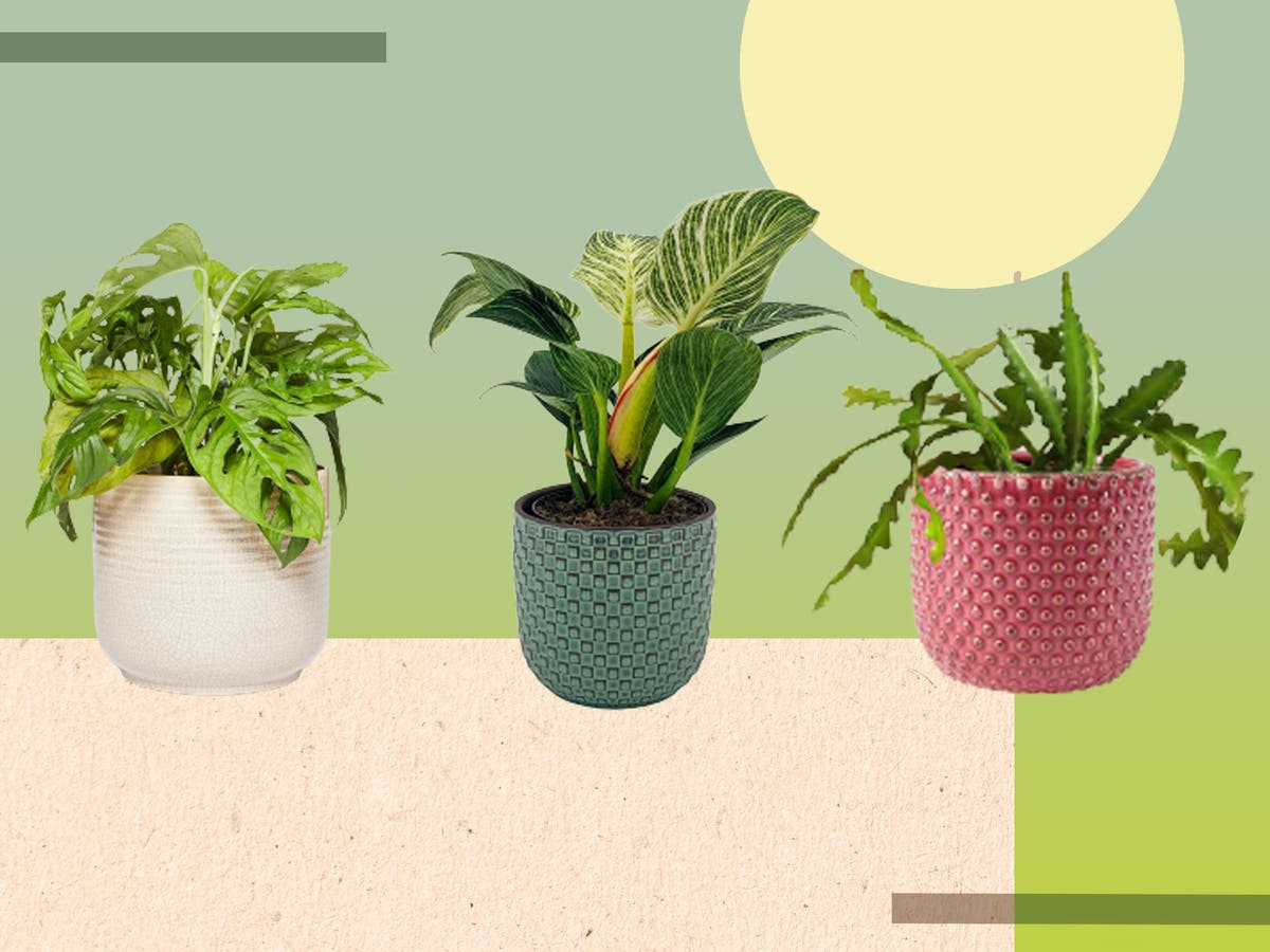 Downstairs loo looking gloomy? There's a houseplant for that