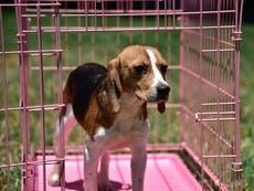 Ricky Gervais jobber for forbud mot alle dyreforsøk etter oppfordringer til avlssenteret skal stenges