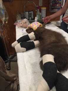 Bear cub rescued from California wildfire