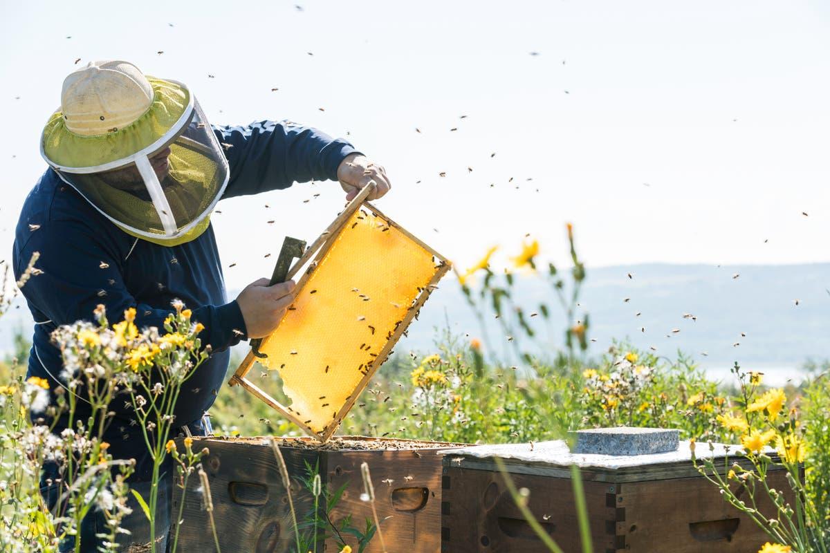 Lições de vida com apicultores - acostume-se com os insetos em sua salada
