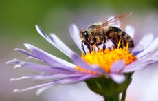 Expert warns of comfort foods that will be lost if bees become extinct