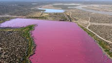 Pink lagoon has Argentine environmentalists seeing red