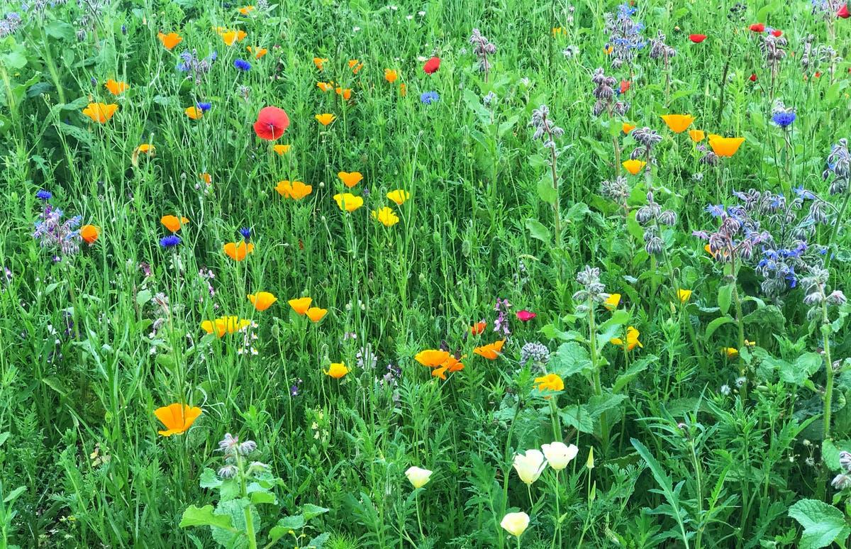 再野生化があなたの庭とあなたの人生をどのように後押しできるか