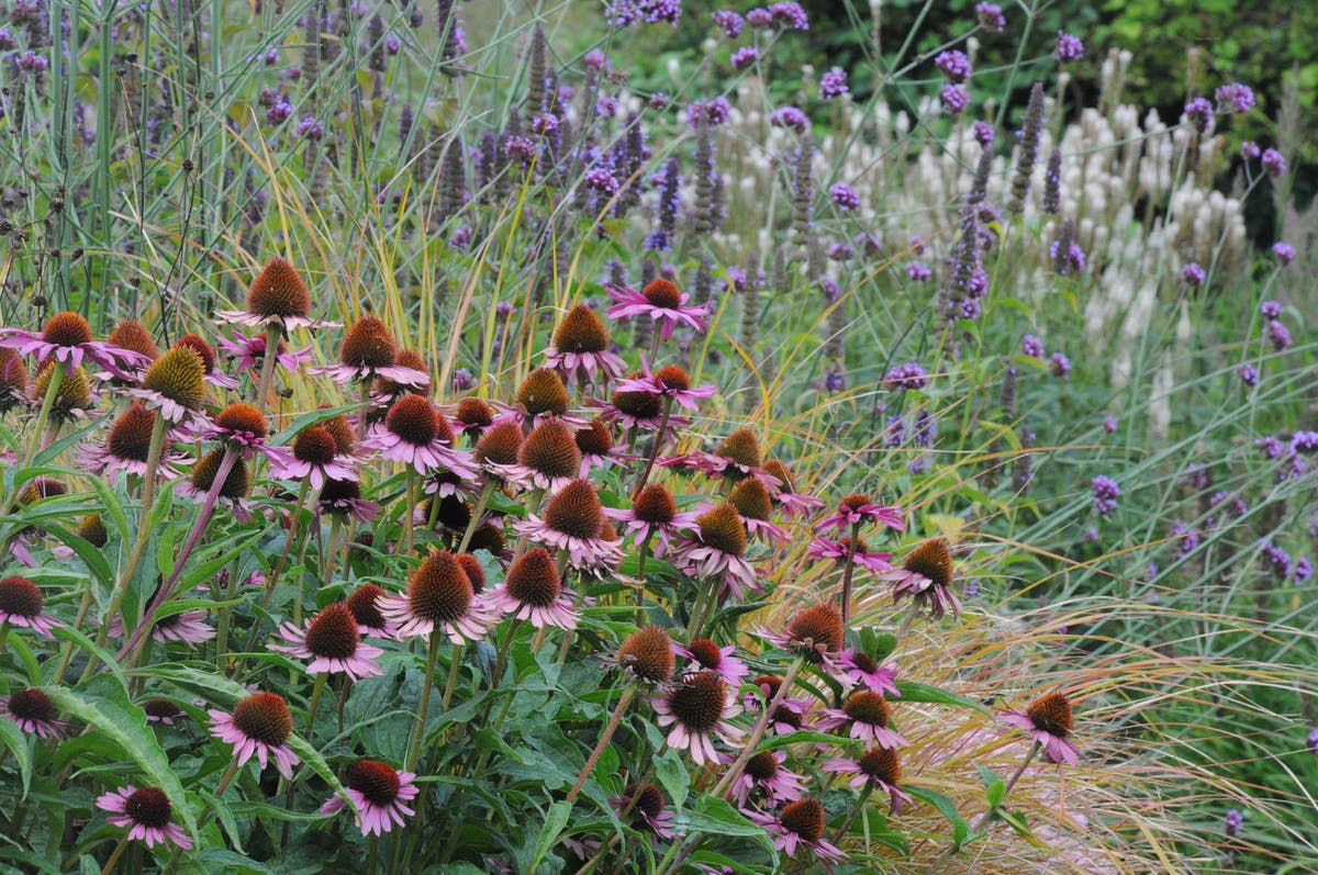 How to make summer colour stretch into autumn in your garden