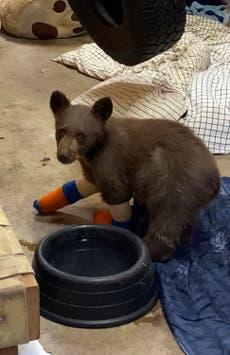 Bears visit evacuated family's home during Caldor Fire in Lake Tahoe