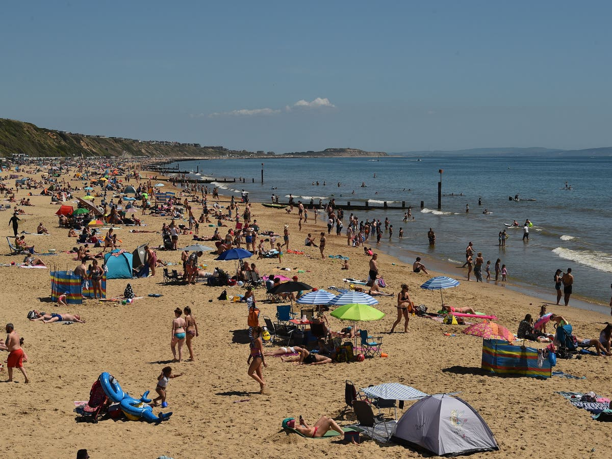 Swimmers ordered out of sea in Dorset shark scare