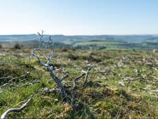 Grouse shooting moors dominating UK national parks and worsening climate crisis, 慈善団体は警告します