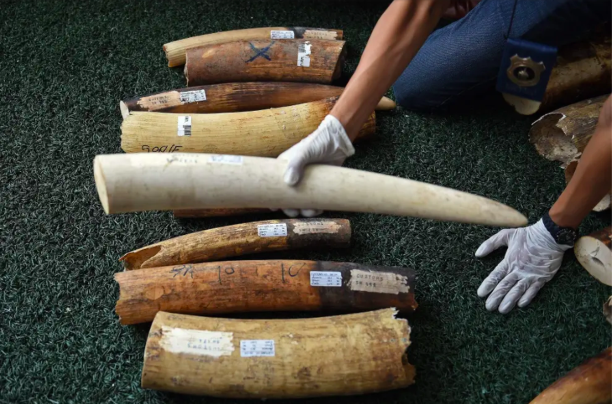 Can 'Know Your Customer' checks help bring an end to the illegal wildlife trade?