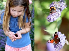 Prince William and Kate Middleton release new photo of Princess Charlotte taking part in Big Butterfly Count