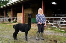 Geronimo's owner says she has 'new hope' alpaca will be saved from execution