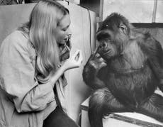 If we teach animals how to 'talk' we have a duty to listen