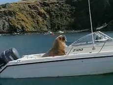 Where's Wally? Famous travelling UK walrus sets up home on motorboat