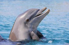New virus found in dolphins risks outbreak through marine life