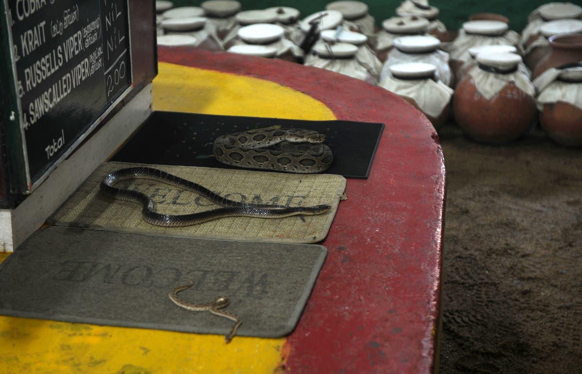 Snake bites man in India, man bites back and kills it in bizarre 'revenge'