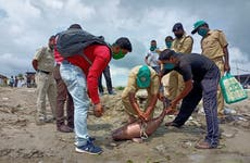 How illegal trade in bait oil is putting Ganges river dolphin at risk