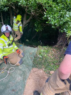 Hero cat's miaows leads rescuers to 83-year-old owner stuck down ravine