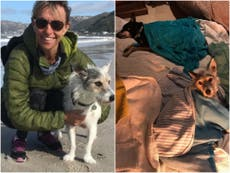 Springwatch's Michaela Strachan reveals dogs were poisoned by crystal meth on walk in Cape Town
