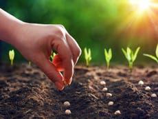 種子は私たちのフードシステムの未来を守る秘訣です | エリック・オーバーホルツァー