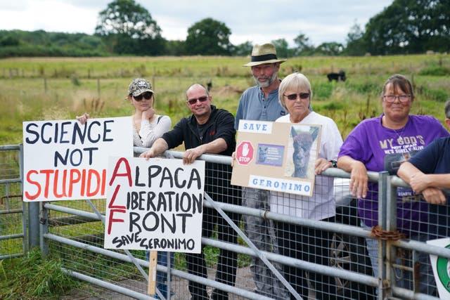Ondersteuners van Geronimo die alpaca vergader buite Shepherds Close Farm in Wooton Under Edge, Gloucestershire