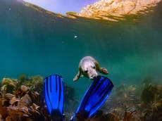 Scuba diving with the seals of Lundy Island