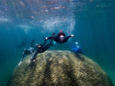 Scientists amazed at 400-year-old giant coral thriving in Great Barrier Reef