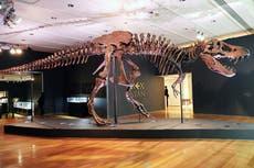 T Rex had best 'bite detectors' of all dinosaurs, 研究は言う