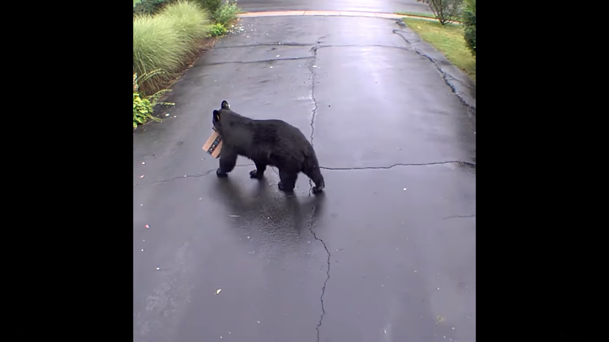 A bear was caught on video stealing package from Connecticut porch