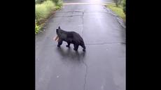コネチカットのポーチからビデオを盗むパッケージにクマが捕まった