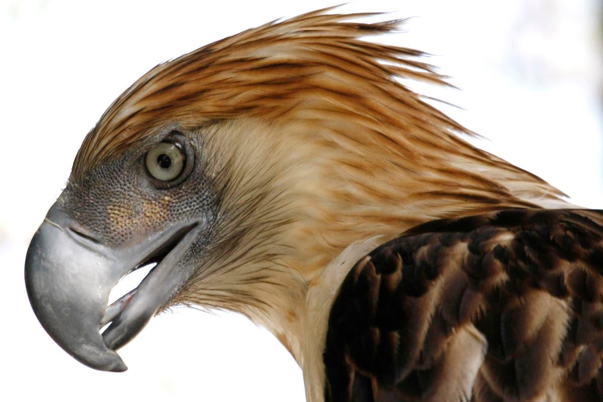 Birds of prey face global decline from habitat loss, 毒