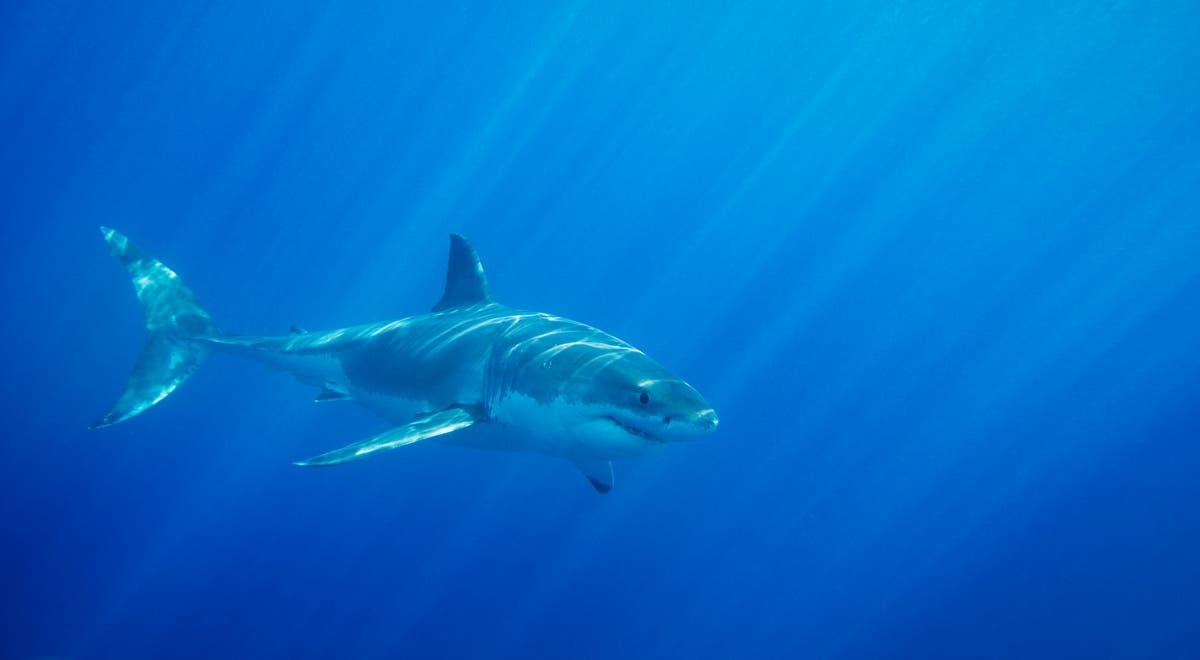 Shark attack leaves California surfer with critical injuries