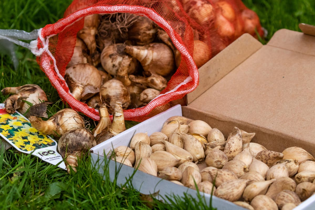 Why do my flower bulbs fail? 8 mistakes you might be making