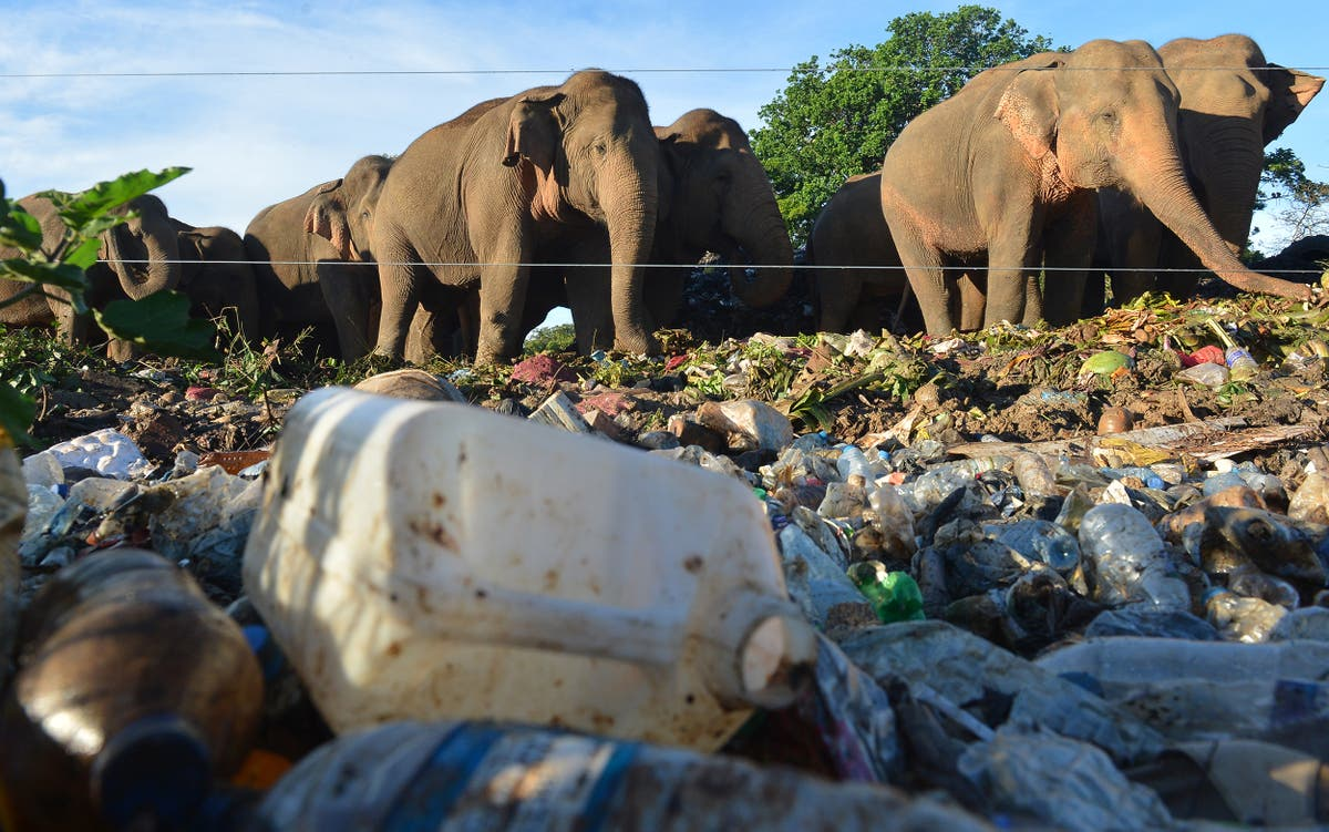 Plastic pollution threatens migratory species in Asia-Pacific, UN says