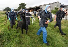 Alpaca Geronimo faces execution as police arrive at farm in Gloucestershire