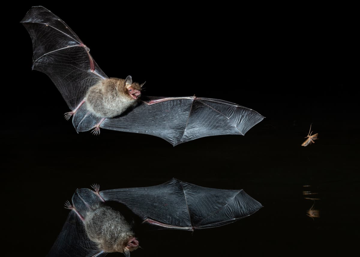 Bats, butterflies and bumblebees threatened by an 'extinction catastrophe'