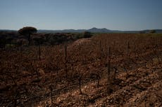 Winemakers despair after French wildfire ravages grapevines