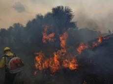 Plus que 47,000 Brazilians hospitalised every year due to wildfire air pollution