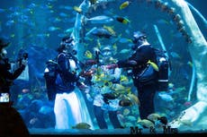 Couple get married underwater in tank with reef sharks