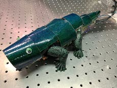 South Korean researchers create chameleon-like artificial skin
