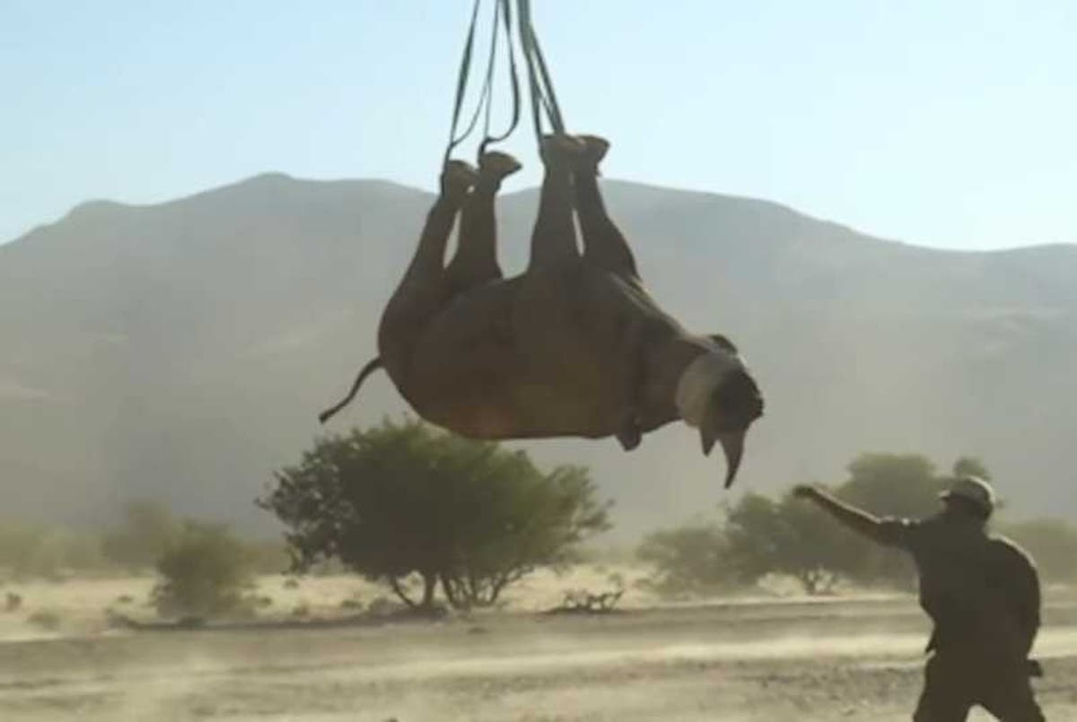 Upside-down rhinos and gum studies win Ig Nobel for weirdest science discoveries