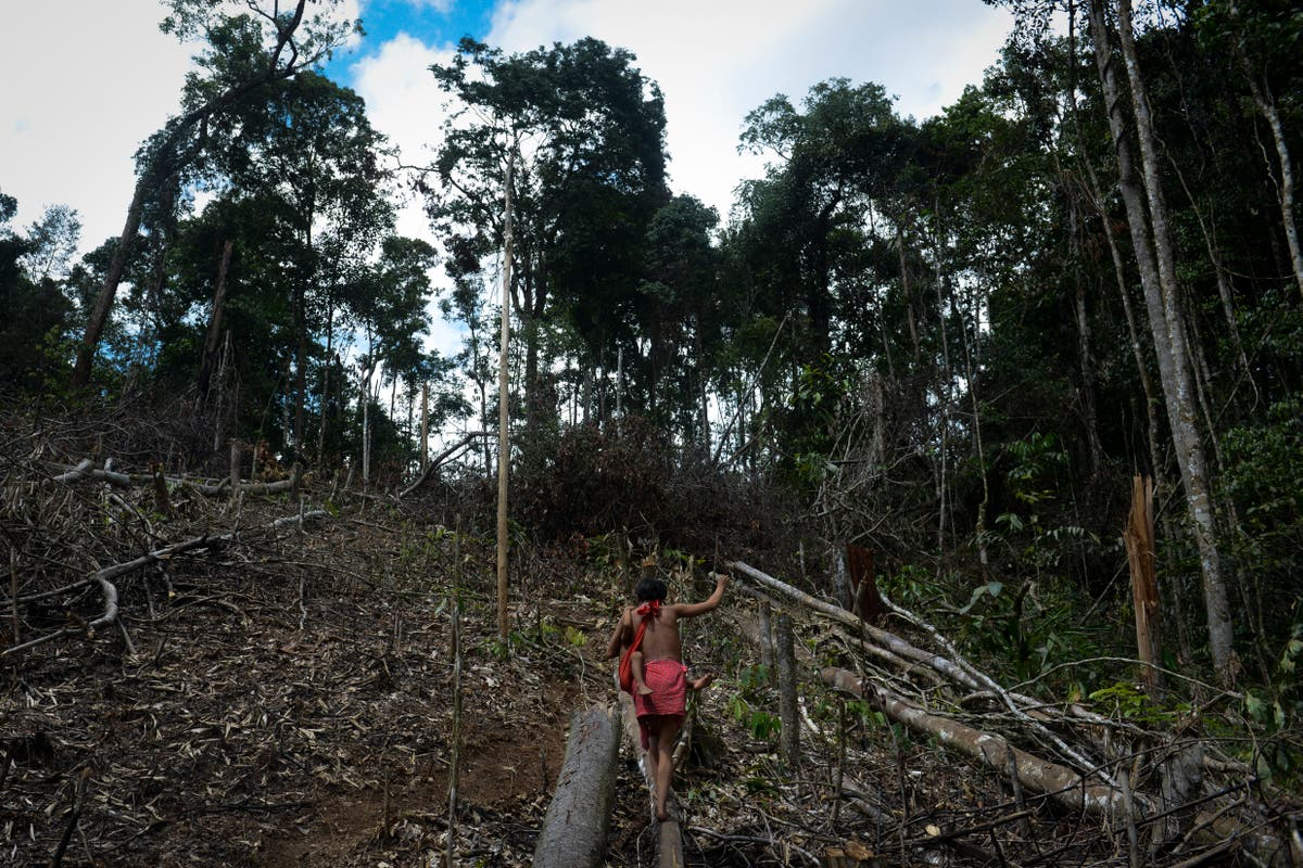 Record 227 land and environmental defenders murdered in 2020