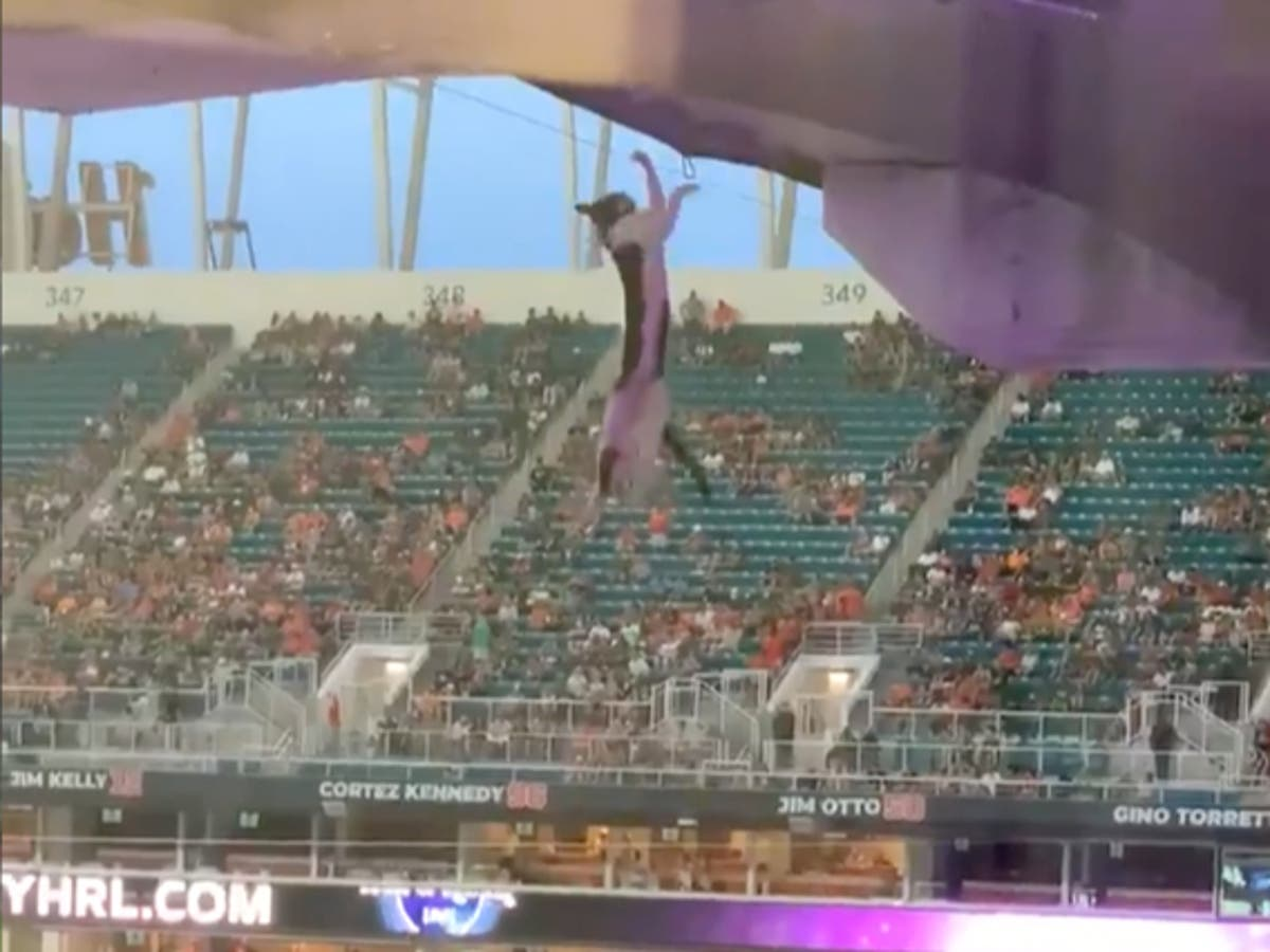 Football fans in Miami use American flag to save a falling cat at stadium