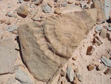 'Flying dragon' may have existed in Chile, scientists find