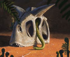 Snakes evolved from survivors of dinosaur-killing asteroid, étude suggère