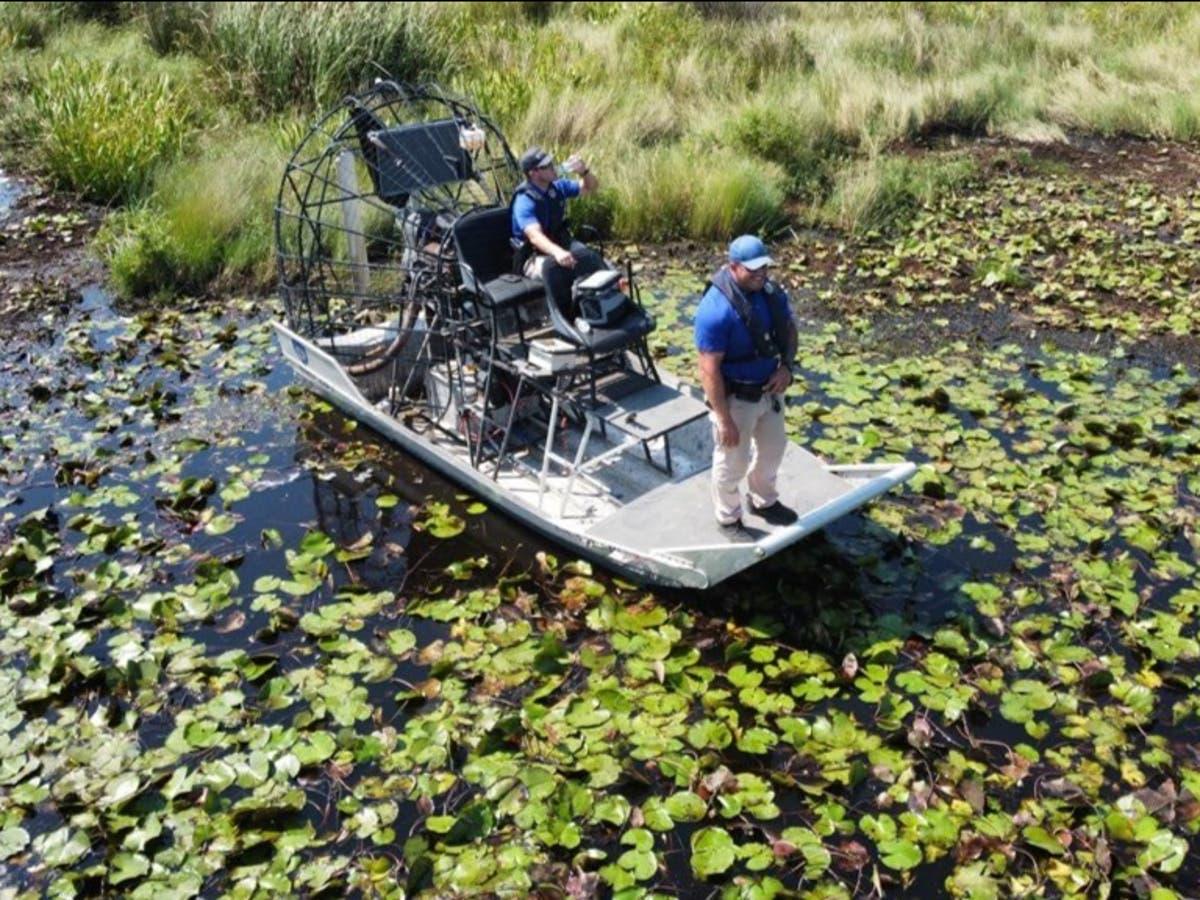 Human remains found inside alligator suspected of Hurricane Ida attack